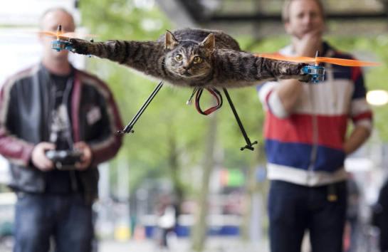 Orvillecóptero: el gatovolador