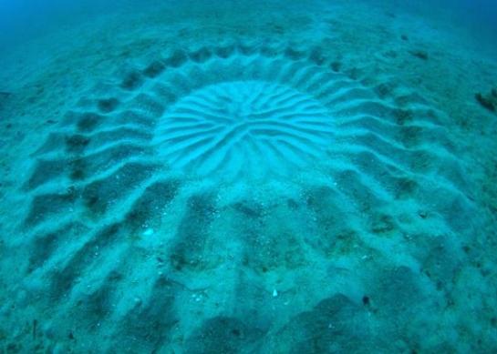 El misterioso circulo submarino