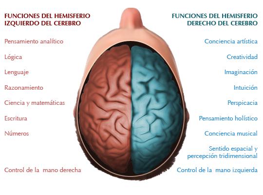 Funciones de los hemisferios izquierdo y derecho del cerebro