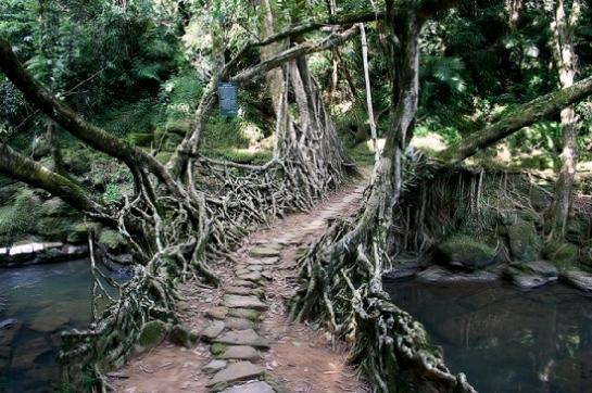 Puente de raíces